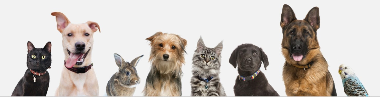 image of various domestic pets